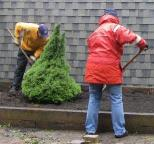 Undeterred by the rain, two St. Gerard's volunteers plant a tree in front of St. Gerard's church on Saturday, September 18, 2010.